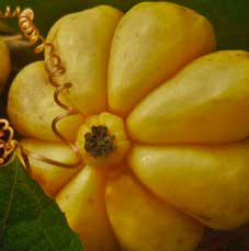 Los ingredientes activos son Garcinia Cambogia